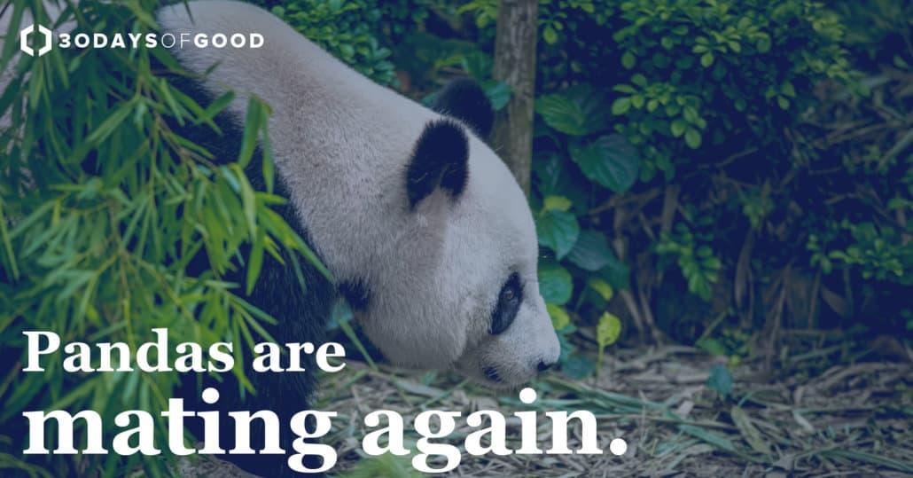 Panda_1200x628-1030x539 30 Days of Good News