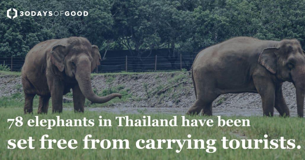 Thailand-Elephants-1030x539 30 Days of Good News